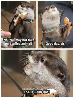 Only pinning for the pic.. I think it's adorable... He couldn't look the otter way when someone wanted his stufftie!