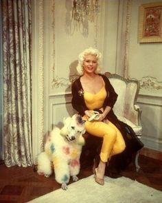 Jayne Mansfield and her very confused looking poodle.