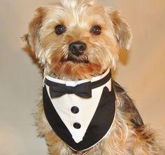 Dog Tuxedo, Pet Wedding Tuxedo Vest,  Bandana Tuxedo Collar, Dog Clothes Black and White Teacup Tuxedo by ChicCanineCouture on Etsy https://www.etsy.com/listing/213046874/dog-tuxedo-pet-wedding-tuxedo-vest