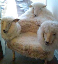creepy sheep chair by Sterin, via Flickr