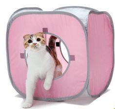 kitty play cube- wanimo- Absolument Chats