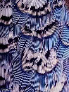Why Are Some Feathers Blue?