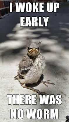 Funny pictures Good morning - The early bird catches the worm - Tier Witze - Lustige Tiere - humor Funny Animal Memes, Cute Funny Animals, Animal Quotes, Funny Animal Pictures, Funny Memes, Bird Pictures, Funniest Memes, Animal Humor, Funny Monday Memes