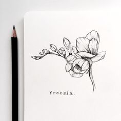 Freesia symbolizes innocence and thoughtfulness. Tattoo Sketches, Tattoo Drawings, Drawing Sketches, Art Drawings, Drawing Ideas, Sketching, Flower Line Drawings, Flower Sketches, Lottus Tattoo