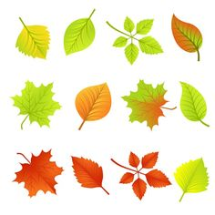 Colorful leaf design vector graphics