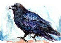 Original Watercolor Painting Resting Raven  One of a by AquaGest, $54.00