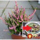 Keď kvitli vresy, moja teta dala do hrsť kvetov do obyčajného octuk: Toto bude najlepší pomocník do každej rodiny! Page 3, Arches, Plants, Arch, Plant, Bows, Planets