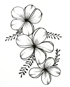 Beautiful Ink Flower Drawing - Drawing Flowers Mandala In Ink Flower Art Drawing Beautiful 25 Beautiful Flower Drawing Information Ideas Tattoos Flower Drawing Beautiful Flower Draw. Easy Flower Drawings, Beautiful Flower Drawings, Pencil Drawings Of Flowers, Flower Art Drawing, Flower Sketches, Floral Drawing, Plant Drawing, Cute Drawings, Drawing Drawing