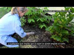 ¿No quieres usar herbicidas en tu jardín? Mira lo que ocurre después de poner unos periódicos viejos | La voz del muro