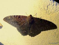 El nacimiento de las mariposas