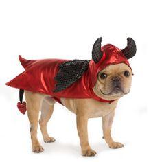 Thrills & Chills™ Pet Halloween Devil Pet Costume   Costumes   PetSmart