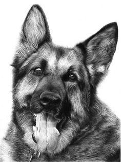 Lisandro Pena. Рисунок карандашом. Немецкая овчарка