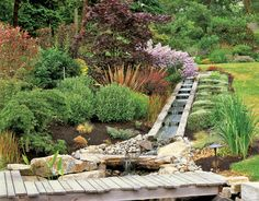 At the base of the watercourse, a wooden footbridge, thoughtfully placed Bandera granite rocks, and Dutch water irises suggest an Asian influence, a common Northwest touch. New Zealand flax, barberry, and a 'Bloodgood' Japanese maple create spikes of color around a bed that combines Asiatic lilies and lady bells.