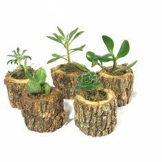 Succulent Pots, Cacti And Succulents, Garden Planters, Indoor Garden, Air Plants, Indoor Plants, Deco Cactus, Wooden Tea Light Holder, Driftwood Planters