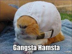 Funny Gangster Hamster Joke Picture