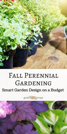 Planning the garden in the fall can help you grow a beautiful garden on a budget…Fall garden planning can save you big bucks! Plants are either inexpensive or free (yup, free!) and when planted in the fall, you will be well on your way to a beautifully designed and low-maintenance garden next year. Read more on perennial gardening in the fall.