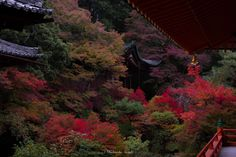 Fall of Japan - Kyoto autumn