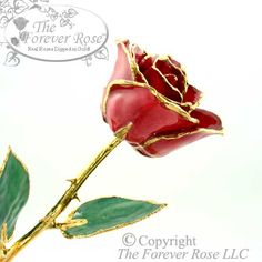 The 24K Gold and Red Forever Rose continues to be our Best Seller! Seriously, If you do not yet own a Genuine Forever Rose it time to get one!