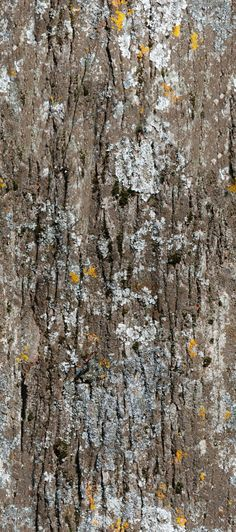 Seamless Tree Bark Texture + (Maps) | texturise
