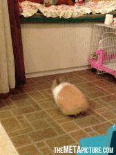 Nice try, bunny… ooooh the poor bunny keep trying...GIF click thorugh
