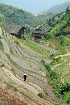 Longsheng rice terraces in Guilin, Guangxi Province_ China