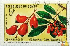 Red Fruit and Flowers. Congo  http://stamps.livingat.org/Search.aspx?nav=Search=country=/Congo_ctl00$ContentPlaceHolder1$GridControlContent=1=Africa%2fCongo%2fDSC_4771.jpg