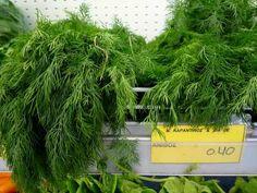 Kapor+–+a+növény,+mely+segít+a+fogyásban