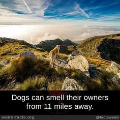 Dogs can smell their owners from 11 miles away. source image via pixabay Wow Facts, Weird Facts, Mind Blowing Facts, White Mountains, Sky Art, Weird Stories, Dogs Of The World, Whippet, Moma