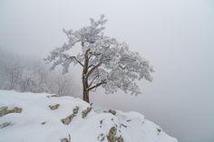 """""""Raven's Roost in Winter"""" (Raven's Roost Overlook on the Blue Ridge Parkway), Melanie Miller Virginia, Donate Now, Blue Ridge Parkway, Winter, Outdoor, Outdoors, Outdoor Games, Outdoor Life"""