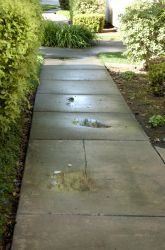 Activities: Puddle Science: Watch Evaporation in Action