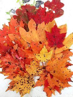 October Born, Autumn, Plants, Fall Season, Fall, Plant, Planets