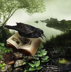 Raven's Tale  //  By Gale Franey at flickr