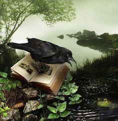 Raven's Tale By Gale Franey . it's that black bird again Crow Art, Raven Art, Bird Art, The Crow, Dark Gif, Blackbird Singing, Quoth The Raven, Jackdaw, Crows Ravens