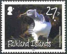 Grey-headed Albatros (Diomedea chrysostoma)