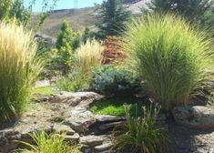 denver-landscaping-xeriscape8 Rain Garden, Water Garden, Garden Club, Agaves, Garden Watering System, Rock Pathway, Stipa, Garden Mirrors, Drought Tolerant Plants