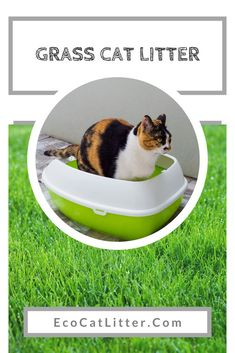 Most recent Absolutely Free grass cat litter Ideas There are various selections for cat and each have their advantages plus disadvantages. Most people glance at the 4 mos Natural Cat Litter, Clumping Cat Litter, Renewable Sources, Urine Smells, Three Cats, Grass Seed, Litter Box, Falling Apart, Cat Food