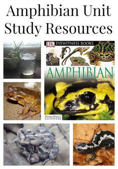 Amphibians Unit Study Resources including amphibian lapbooks and printables, amphibian books, amphibian activities and lesson plan ideas.
