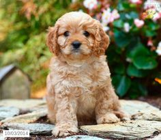 43 Best I Dogs Images Puppies Tips Best Dog Food Best Dogs
