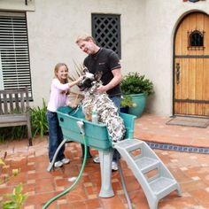 Booster Bath Large Portable Dog Bathing Station   Buy Dog Supplies Online - dealsdirect.com.au