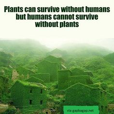 Well Said Quotes About Plants vs Humans