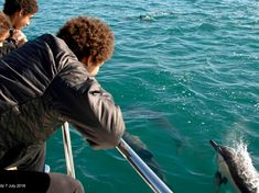 Simon's Town Boat Company | Seal Viewing Trips | Cape Town - Dirty Boots Boat Companies, At Close Range, Table Mountain, Picture Postcards, Adventure Activities, Stunning View, Cape Town, Wine Tasting, Beautiful Beaches