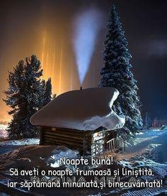 Christmas Tree, Holiday Decor, Nature, Teal Christmas Tree, Xmas Trees, Christmas Trees, Xmas Tree