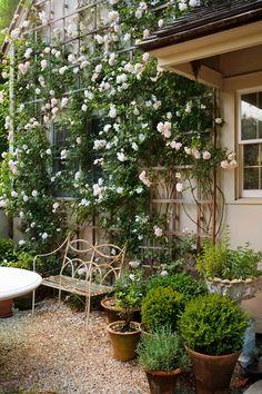 Pea Gravel, Home Landscaping, Interior Garden, Climbing Roses, Container Gardening, Flower Gardening, Garden Accessories, Topiary, Architecture Details