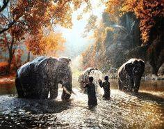 Купание слонов Индия/Bathing of elephants India Относись ко всем с добром даже к тем кто с тобой груб. Не потому что они достойные люди а потому что ты  достойный человек #путешествие#красиво#фото#vk#осень#природа#небо#мир#умныемысли#цитаты#закат#купание#индия#лес#слон by amazingworld_wildlife