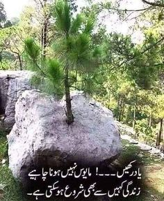Friendship Quotes In Urdu, Poetry Quotes In Urdu, Sufi Quotes, Love Poetry Urdu, Allah Quotes, Urdu Quotes, Qoutes, Islamic Images, Islamic Messages