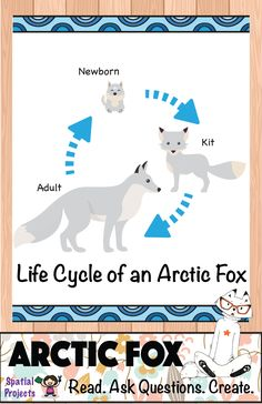 Life Cycle of the Arctic fox (Arctic Animal) - Inquiry-based learning *Includes lapbook making guide, craft pattern, worksheets, reading passages, fun facts Animal Science, Animal Activities, Writing Activities, Winter Ideas, Winter Fun, Fox Facts For Kids, Fox Craft Preschool, Cycle For Kids, Artic Animals