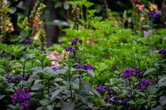 Plants, Flora, Plant