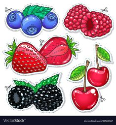 Sweet berries vector image on VectorStock Holly Berries, Red Berries, Bird Crafts, Paper Crafts, Felt Wall Hanging, Preschool Learning Activities, Food Drawing, Card Sketches, Cute Food