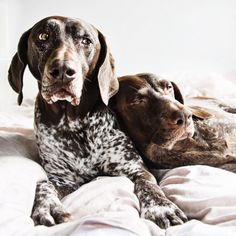The Pointer Brothers