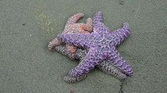 Playing Twister can get awkward for starfish, too.